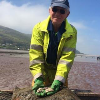 Oysters being taken to their beds in Porlock Bay
