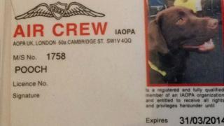 """Callie the dog's """"crew card"""""""