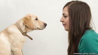 Labrador Belle meets student Jodie Ross