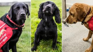 Three dogs in separate photos: One is a black Labrador, another a small black dog, and the final one a golden Labrador