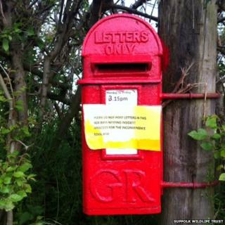 The post box in Orford where birds are nesting