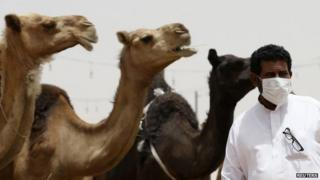 A man wearing a mask looks on as he stands in front of camels at a camel market in the village of al-Thamama near Riyadh, Saudi Arabia 11 May 2014
