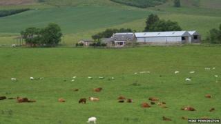 Shealwalls Farm