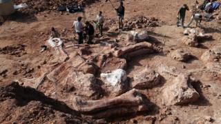 'Biggest dinosaur ever' discovered
