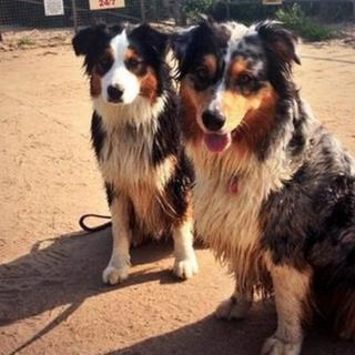 Dog patrol recruits Gypsy and Pip