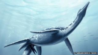 Plesiosaur giving birth (Credit: S. Abramowicz/NHM)