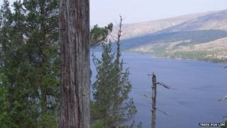 Woods at Loch Arkaig
