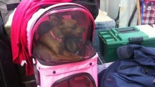 A dog sitting in a pram in Newark
