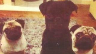 The Pugs, of which two were stolen