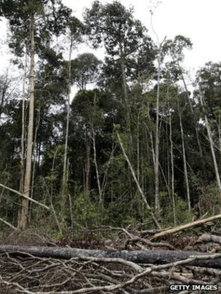 Felled forest (Getty Images)