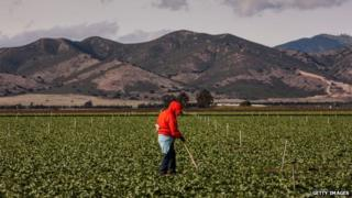 A farm worker appeared near Gonzales, California, on 4 April 2013
