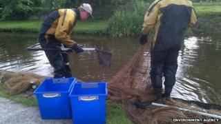 Representatives from the Environment Agency and the Canal River Trust tried to rescue surviving fish.