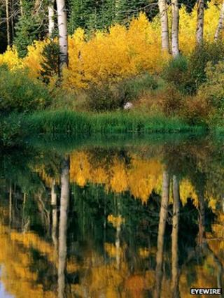 Trees on the edge of a lake (Image: EyeWire)