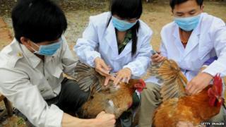 Bird flu 'danger zones' mapped