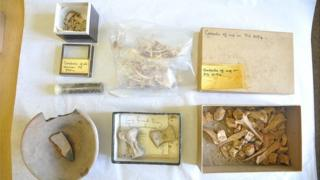 4,500 year-old animal bones, pottery and seeds