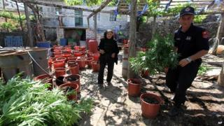 Albanian police officers display seized marijuana in the lawless village of Lazarat on 20 June 2014