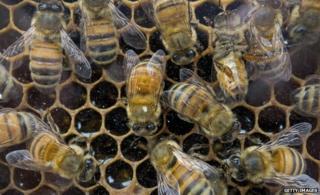 US sets up honey bee loss task force