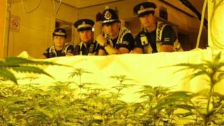 Police with cannabis plants