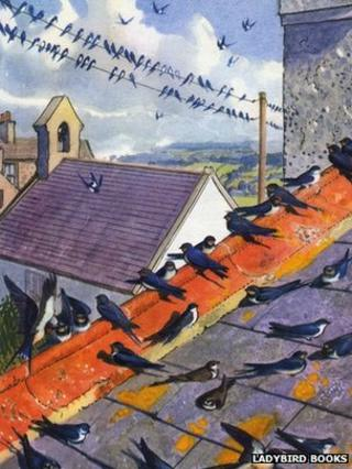 Charles Tunnicliffe illustration of swallows on the roof of his house in Malltraeth, Anglesey