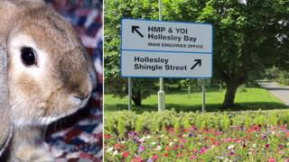 A rabbit and HMP Hollesley Bay sign