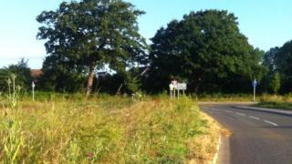 Overgrown verge in Sussex