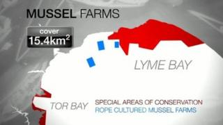 Graphic of Mussel farm and conservation areas