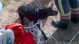 Mine fall dog Aristotle. Pic: Cornwall Fire Service