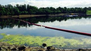 algae at Strathclyde park