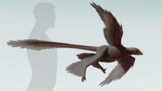 Dinosaur image compared to size of a man