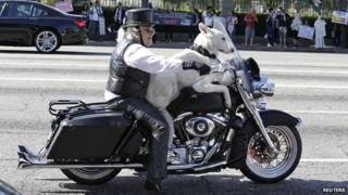 A man and his dog on a Harley