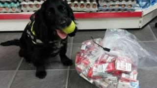 Phoebe, a sprocker spaniel helped detect concealed stashes of tobacco at a further seven premises.