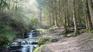 Woodland waterfalls near Abercynafon, Brecon