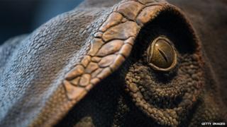 Close up of a model dinosaur's eye