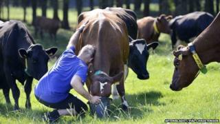 Ex-prisoner says goodbye to favourite cow