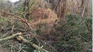 Niwed wedi'r storm