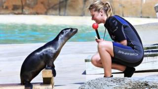 Alyx Milne and sea lion