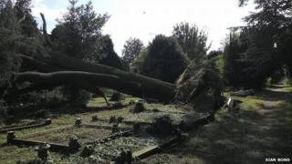 Toppled tree in March cemetery