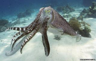 Camouflage sheet inspired by octopus