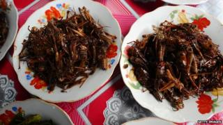 Fried insects on a plate