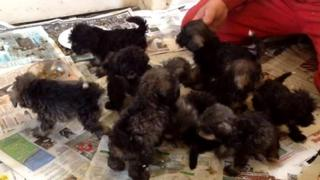 Puppies abandoned in Norfolk