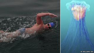 Ed Williams swimming and a Lion's mane jellyfish