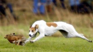 A greyhound chases a hare during the 157th Waterloo Cup on the Altcar estate near Formby, Lancashire in 2004