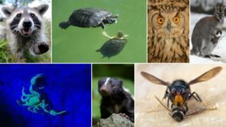 Animals composite