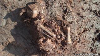 Bones in peat