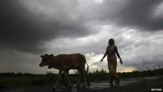Woman walks with her livestock, India (Image: Reuters)