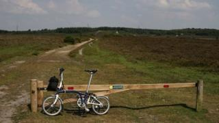 Cycling in New Forest