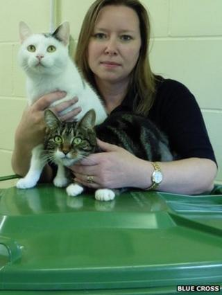 Cats with animal shelter staff member