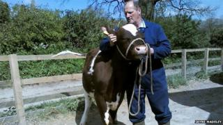 Neil Madeley and cow