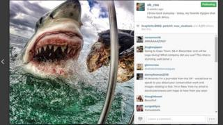 Twitter photo of giant shark