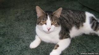 Missing cat in Ipswich